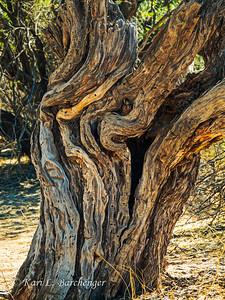 Wood-8