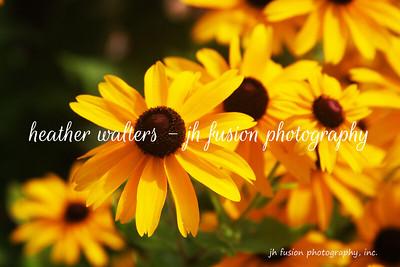 Florals, Plants, Trees