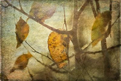 Autumn on Waterpaper