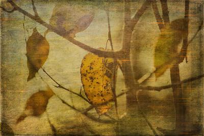 Autumn on Canvas