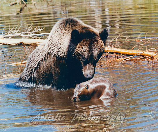 Grizzly and Beaver