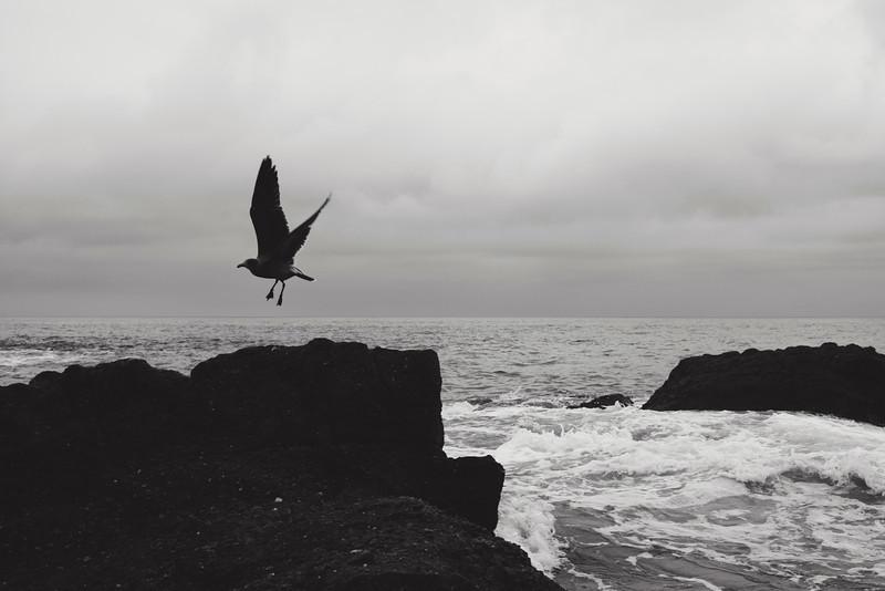 gull-126-bw