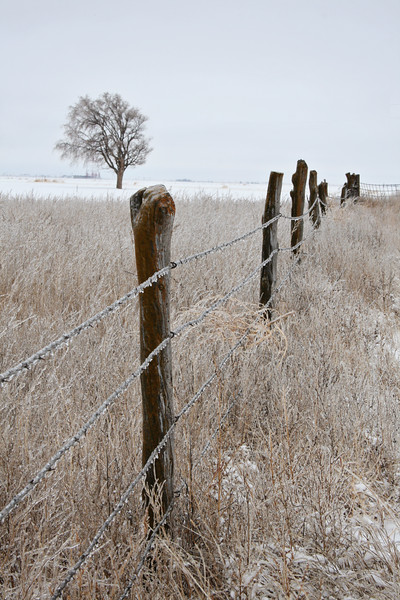 Icy Fence and Field