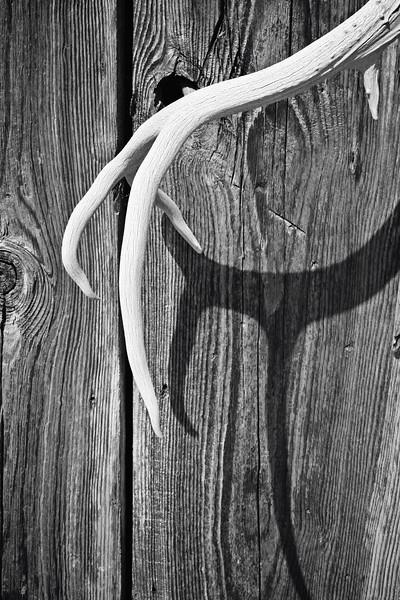 Antler Shadow on Wood