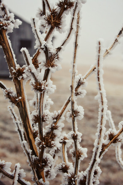 Frost on the Farm
