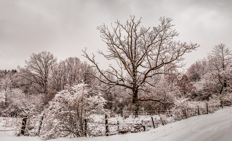 Winter Tree_West Virginia _Panorama1
