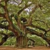 Angel Oak. Johns Island. Charleston, South Carolina