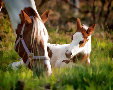 New foal resting in the sun