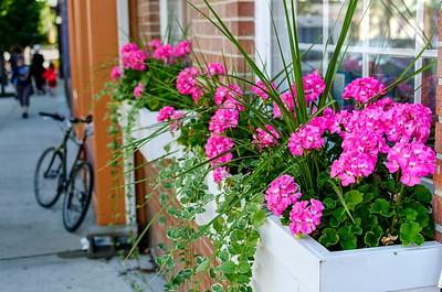 Flower Box Surprise