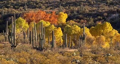Sonoran Fall