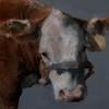 """Field Cow Close-Up"", oil, 8x10 JPG"