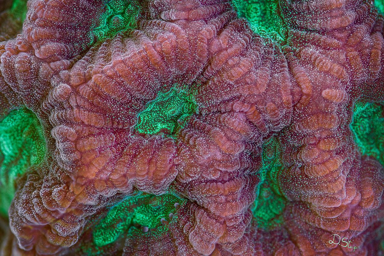 Favites hard coral under high magnification.