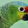 DSC_7584 parrot h