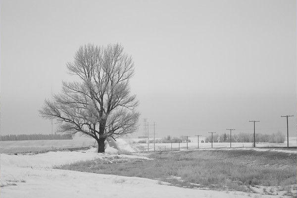 Lone Tree Horizontal