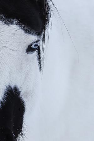 Half horse BW