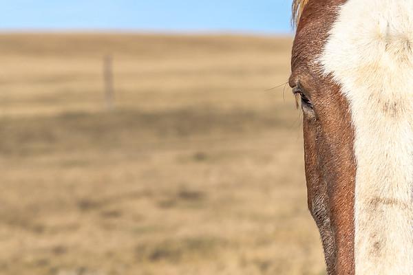 Half horse