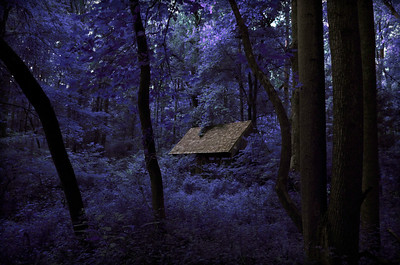 Sapphire Woods