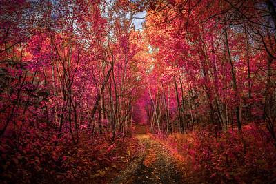 Autumn's Fantasy