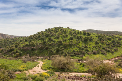 Green hill in spring. Golan heights, Israel.