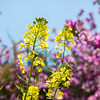 Spring flower of wildlife nature