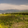Hermon Mountain in panorama. Via fields of spring flowers. Israel.