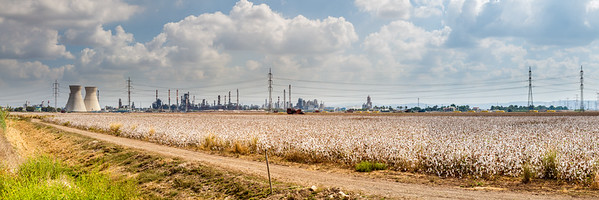 Industry against nature. Pano background of the cotton field near big city