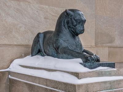 Bronze Pumas in Winter