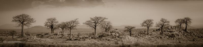Rhaha Baobabs Art Print