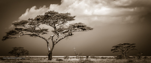 Serengeti Trees Art Print