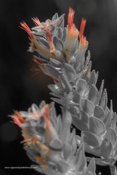 Marsh Pagoda Flower Art Print