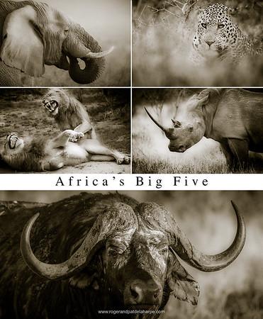 Big 5 Poster