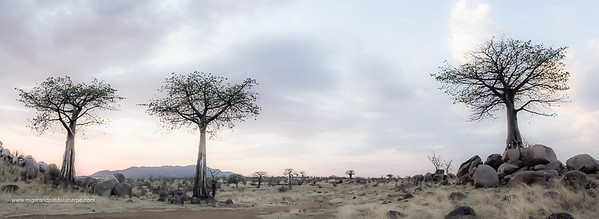 Ruaha Baobab Road Print
