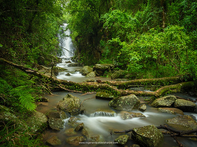 Mountain stream at The Cavern Drakensberg Resort. Northern KwaZulu Natal Drakensberg. South Africa