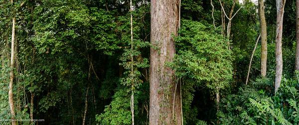 Odzala Rainforest Panorama Print