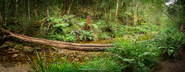 Forest scene at Jubilee Creek, part of the Garden Route National Park. Western Cape. South Africa