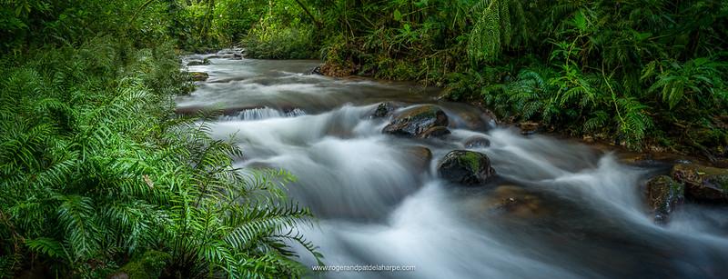 Mountain river. Forest interior. Bwindi Impenetrable Forest. Uganda