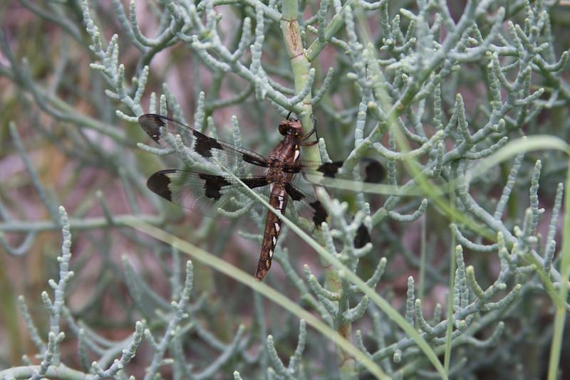 Santa Rosa Spring 112010-05-08