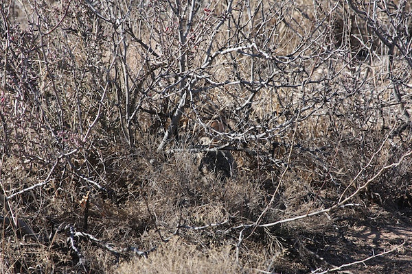 Can you see the Cottontail?<br /> Jan 9 2010