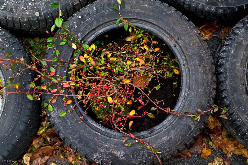 Tyre fill -1