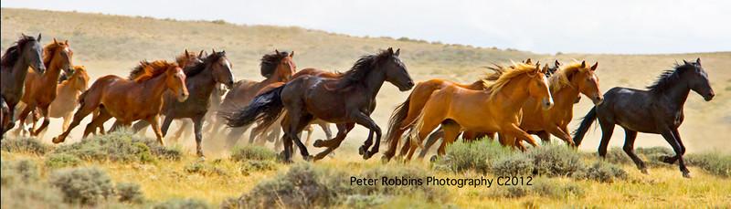 _Mustangs