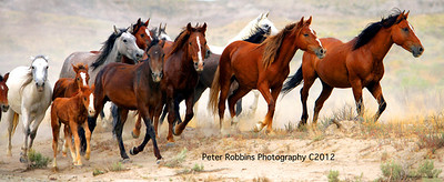 Mustang Harem