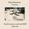 013_Palm Shadows
