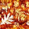 Leafy Impressions