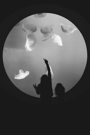 The wonder of childhood. Monterey Aquarium, CA.