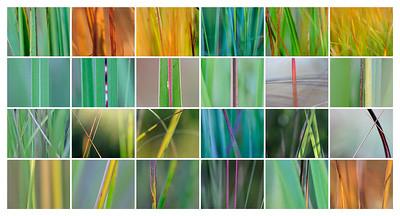 grass diversity - gräserne Vielfalt