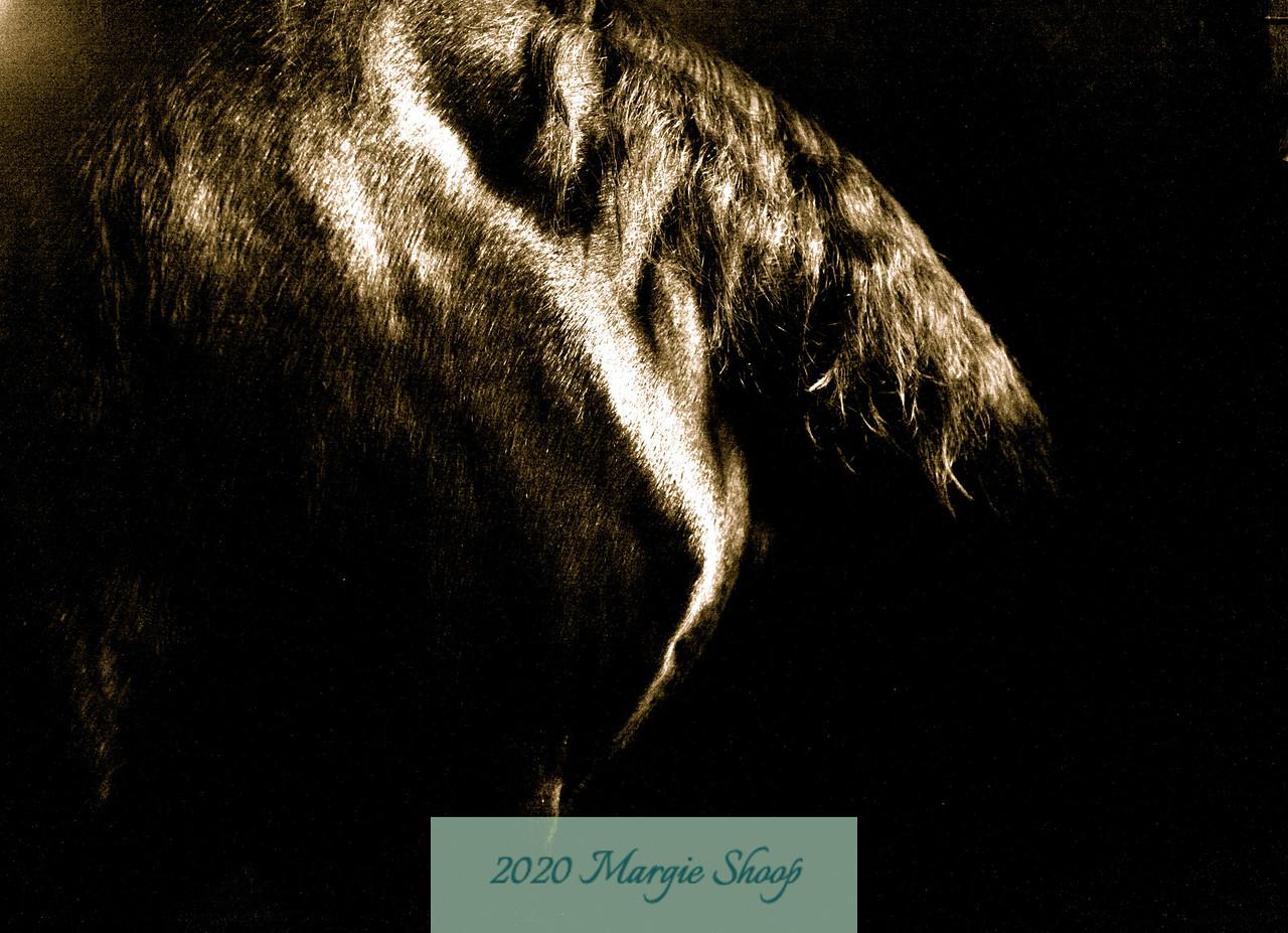 My Refuge His Shoulder_MShoop_2010