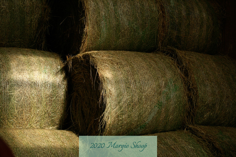 Hay and Light_MShoop_IMG_7619.jpg