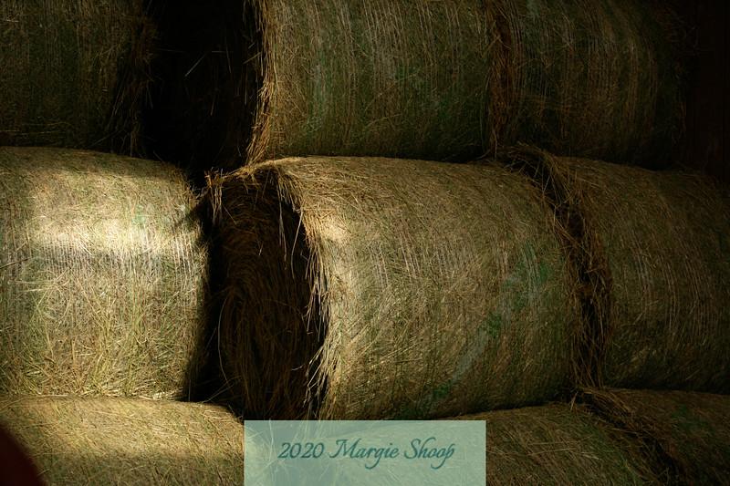 Hay and Light_MShoop_IMG_7619