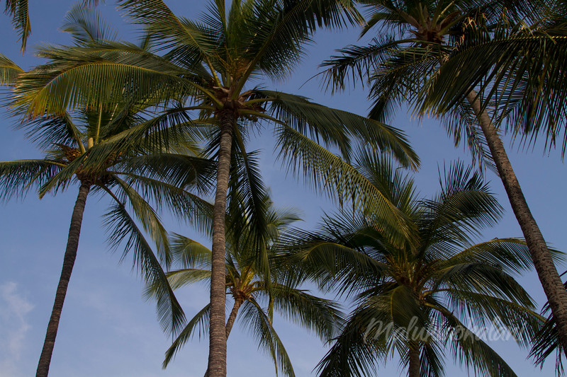 Above us, only Palms