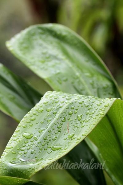 Rain on Ti